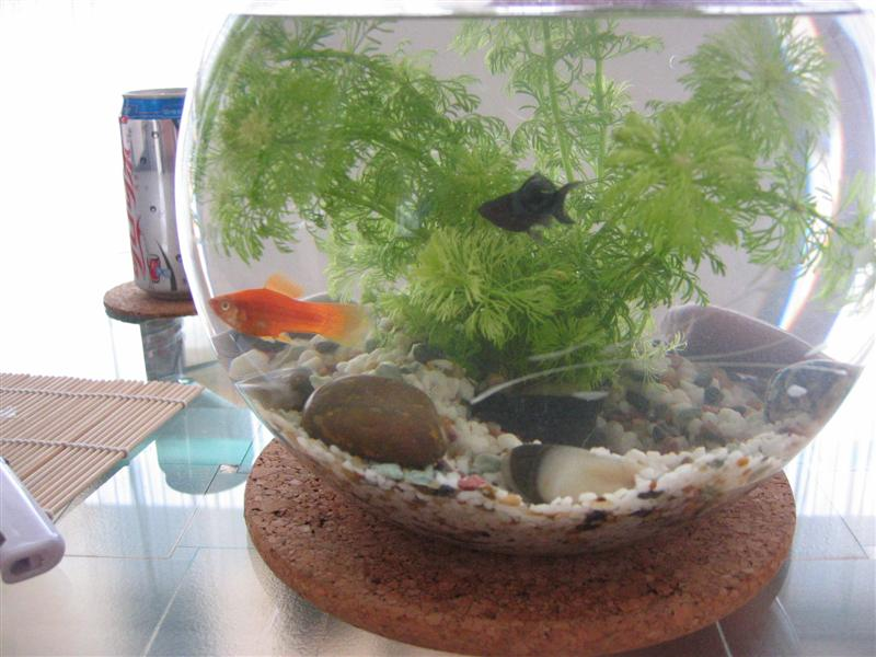 wilbert und hugo. Black Bedroom Furniture Sets. Home Design Ideas